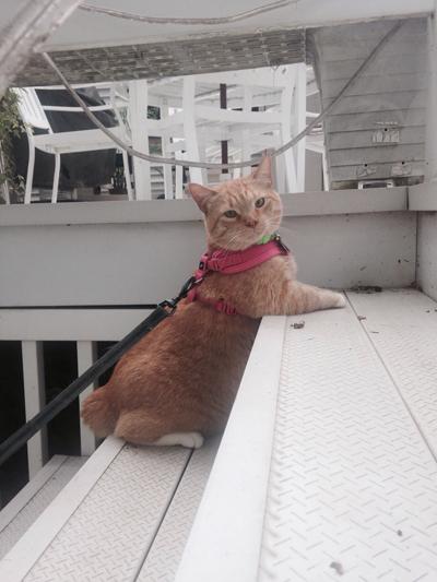 cutest kitty ever!